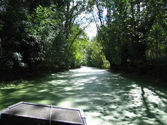 Local Attractions. The Marais Poitevin (Green Venice)